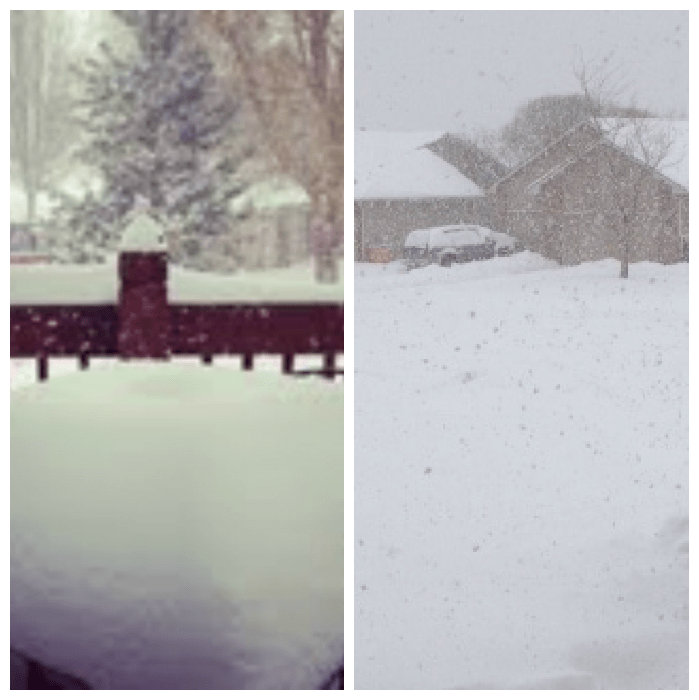 snowday collage