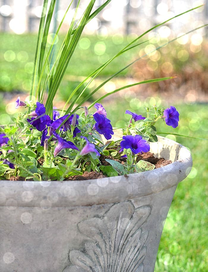 planter-with-bokah