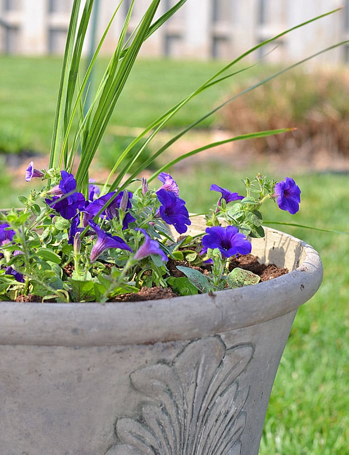planter-with-wave-petunia